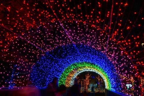 冬の夜を彩るイルミネーションスポットを大特集! 冬のイルミネーション