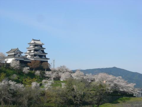 大洲城の桜