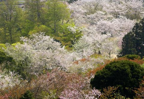 白野江(しらのえ)植物公園