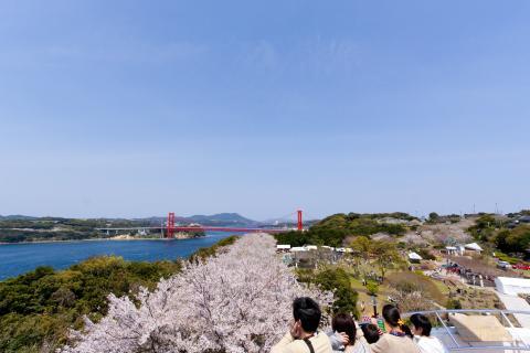 田平公園 平戸大橋を一望できる展望広場からの景色は最高です。
