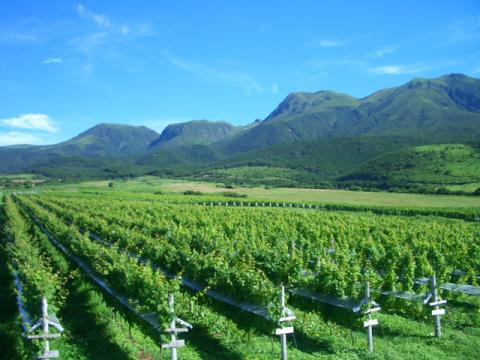 久住ワイナリー 葡萄の一枚畑