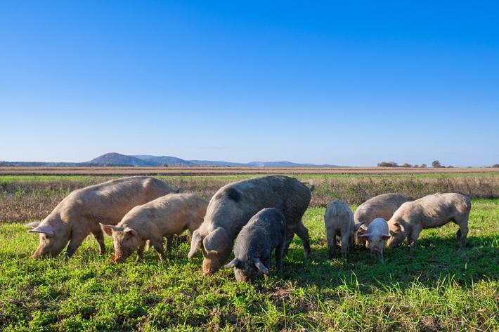 旭市ブランド豚認知度向上企画「旭の豚を丸ごと食べ尽くそう」第一弾!「野菜も忘れずにね!」編