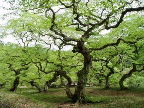 ぐにゃぐにゃした樹木画像